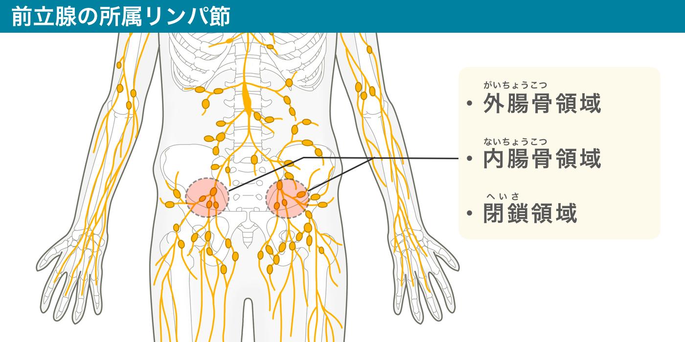 前立腺の所属リンパ節