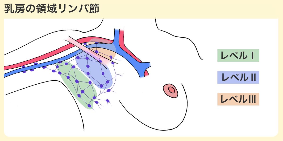 乳房の領域リンパ節