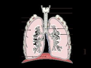 喘息 アスピリン アスピリン喘息で知りたいこと一覧