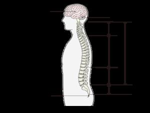 第 一 腰椎 圧迫 骨折