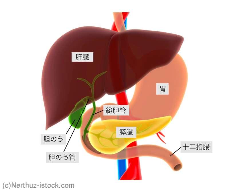 胆嚢 が ん 原因