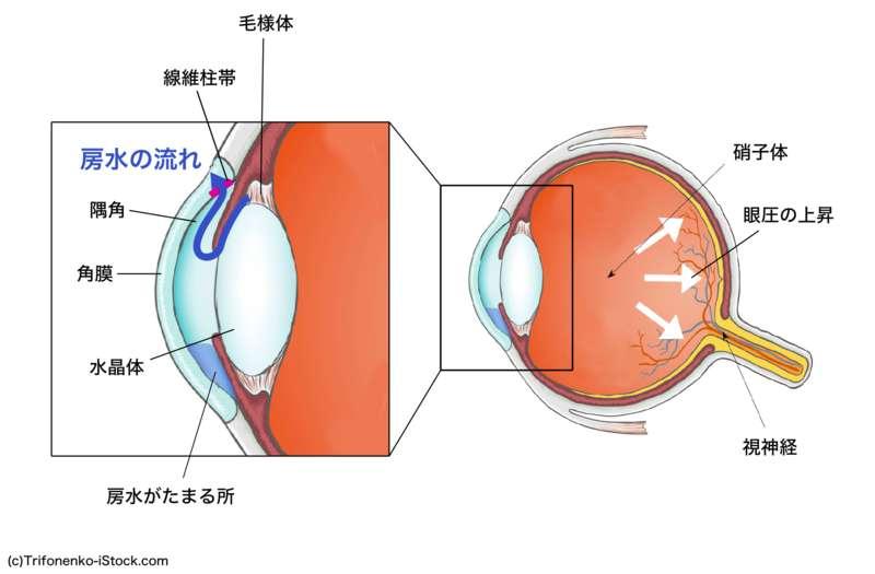 眼圧の成り立ちと緑内障