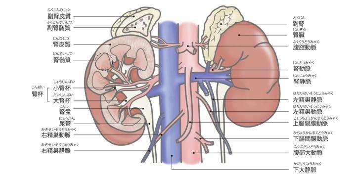 症状 腎臓 が ん