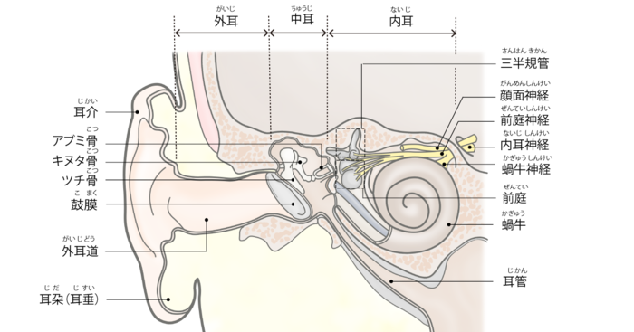 痛い 原因 が 耳