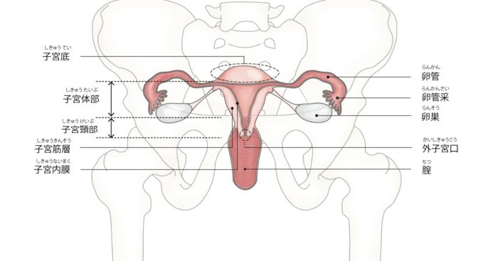 原因 子宮 やりすぎ 内 膜 症