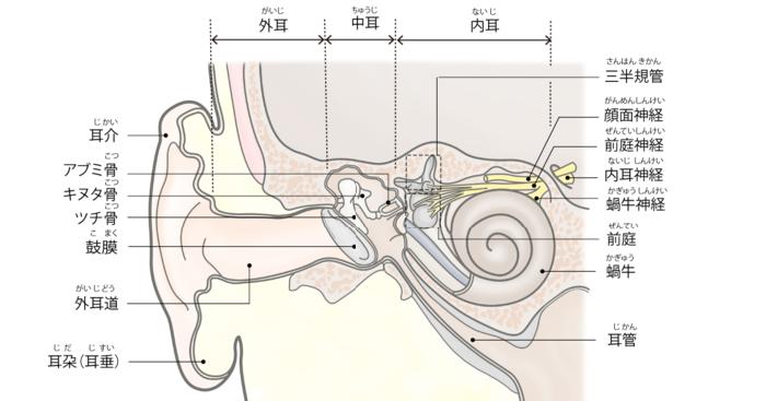 耳の構造のイラスト。中耳は外耳と鼓膜で隔てられている。上咽頭から耳管を通じて空気が出入りしている。