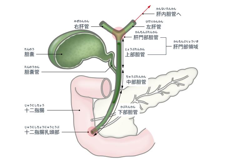 体の奥深く十二指腸がんを取り除く「ハイブリッド手術」