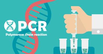 新型コロナが治ったはずなのにPCR検査が再陽性?原因は何が考えられるのかの写真