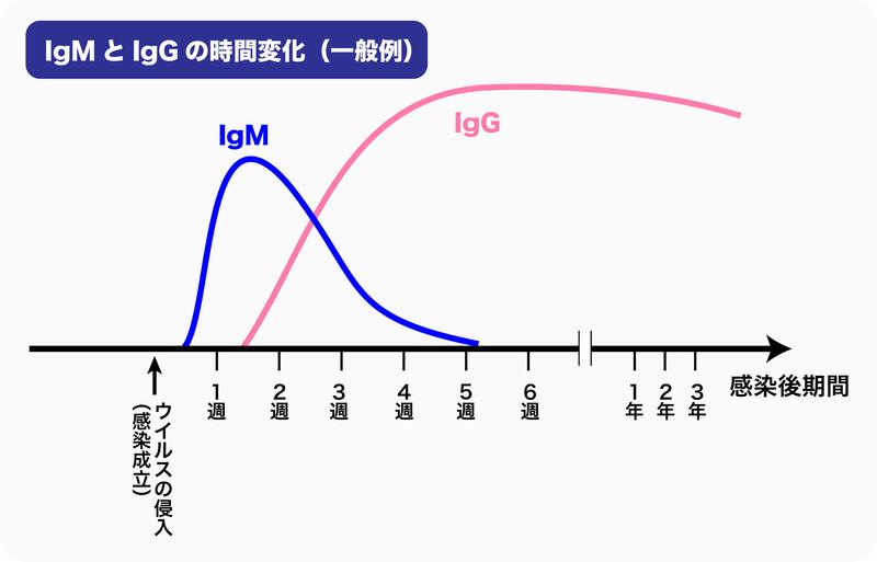 抗体検査で調べる抗体IgMとIgGの時間変化(一般例)