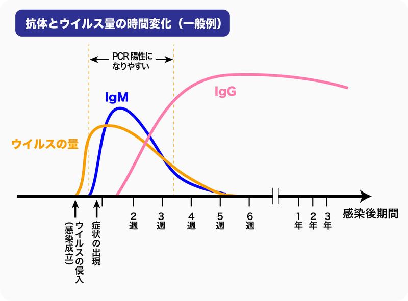 抗体検査で調べる抗体と新型コロナウイルス量の時間変化(一般例)