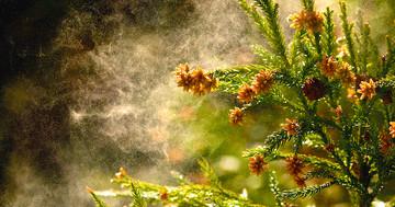 花粉症の時期到来:受診しますか?市販薬を使いますか?の写真