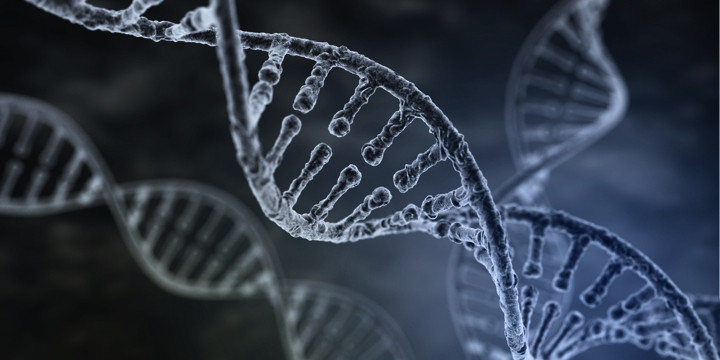 ウイルス感染による糖尿病発症の原因遺伝子を特定の写真