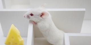 脳をアルツハイマー病から守る物質の写真
