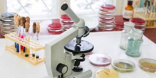 細菌検査のイロハの写真
