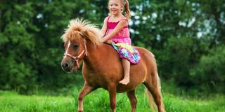自閉症児のコミュニケーション能力、乗馬で向上?の写真