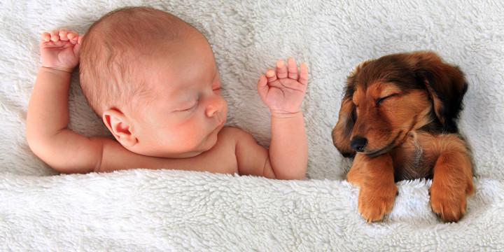 ペットを飼うとペットアレルギーが増えるのか?の写真