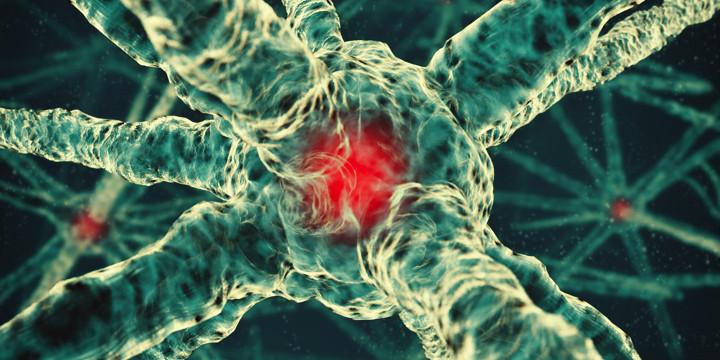 東大発、がんに集まる物質をMRIで狙って、がん細胞を破壊の写真