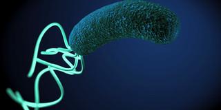 ピロリ菌に感染していると多発性硬化症になりにくいのか?の写真