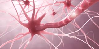 傷ついた神経が細胞移植で回復の写真