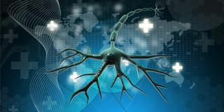 第4の抗がん治療、免疫細胞にがんを攻撃させる「免疫療法」の写真