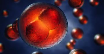 卵巣刺激と人工授精の組み合わせで多胎妊娠が10倍に、不妊治療と多胎の関連の写真