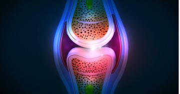 変形性膝関節症の新治療になるのか?幹細胞で膝関節の軟骨が再生の写真