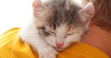 亜鉛が眠りを深くする?ノンレム睡眠に与えた効果の写真
