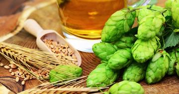 ビールの原料ホップの成分「キサントフモール」が肥満と脂肪肝を抑制したの写真