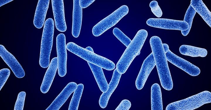乳酸菌の一種、ラクトバチルス・ロイテリが糖尿病に関連するホルモン分泌を改善するの写真