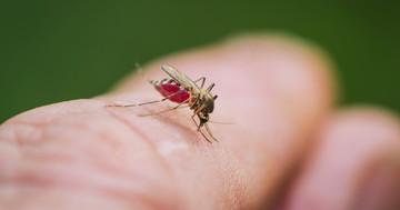 感染症を媒介する蚊は遺伝子で人間を選んでいた!都市型ネッタイシマカの特徴の写真