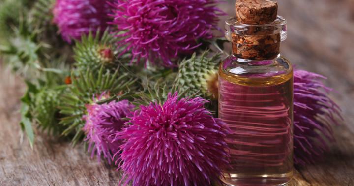 インド産の植物が動脈硬化を改善、炎症抑制と関連の写真