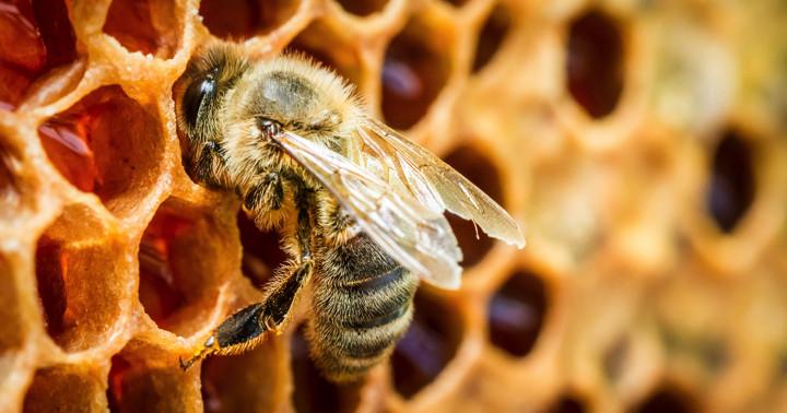 ハチミツはアルコール中毒に効果があるか?の写真