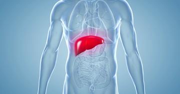 難病アミロイドーシスの治療へ、肝臓にたまったアミロイドを抗体で除去の写真