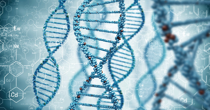 脂肪肝と関係する遺伝子、PNPLA3 の写真