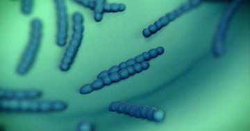 子どもの肺炎球菌ワクチンで13種類の細菌が減ったが、気になる変化もの写真