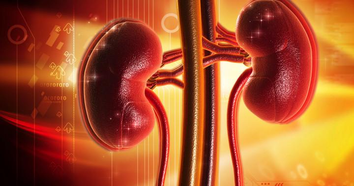 脂肪肝で腎臓病のリスクが増加 の写真