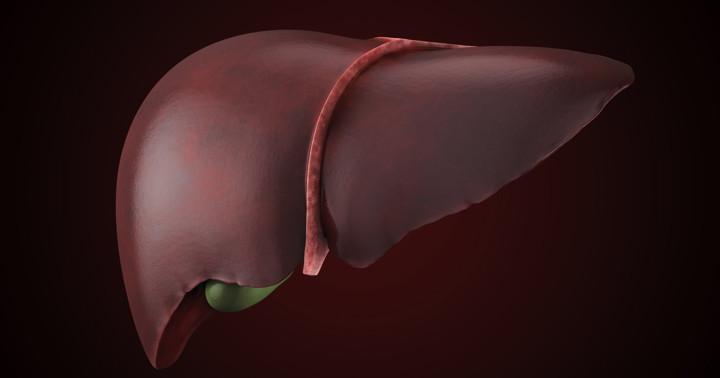 エンテカビルは慢性B型肝炎で肝臓の線維化を抑えるの写真