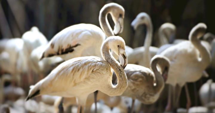 中国で野鳥が大量死、新型鳥インフルエンザウイルスを検出の写真