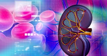 尿酸値を下げる薬、フェブキソスタットは腎機能低下を遅らせる?の写真