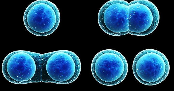 幹細胞とは何か?(1)体細胞と生殖細胞との違いの写真
