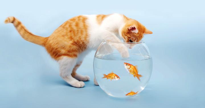 たくさん魚を食べるとうつになりにくい?の写真