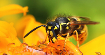 ハチに刺されて多臓器不全に、遅れて現れた反応とはの写真