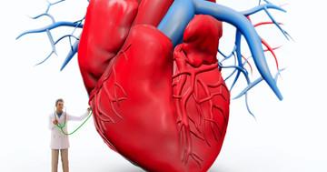 難病・拡張型心筋症の心機能を再生、骨髄細胞移植とG-CSFの効果の写真