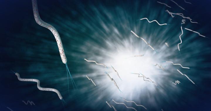 尋常性天疱瘡の原因に関係が?糞線虫、ピロリ菌の感染の写真