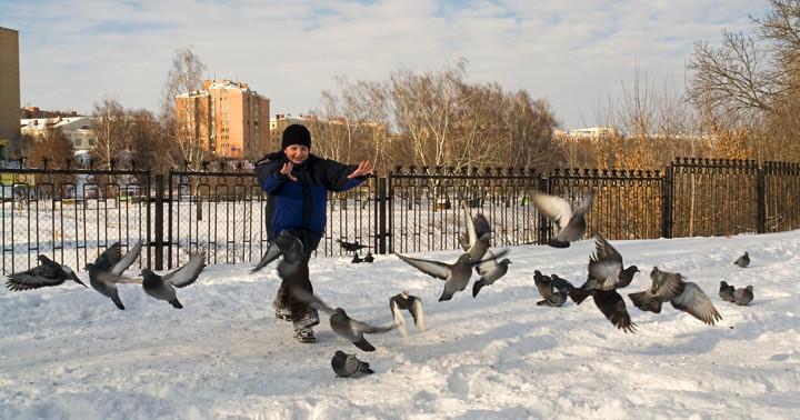 鳥インフルエンザの感染源になった鳥とは何だったのか? の写真