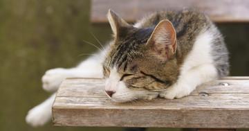 猫の糞に潜むトキソプラズマ、ワクチンで感染を予防の写真