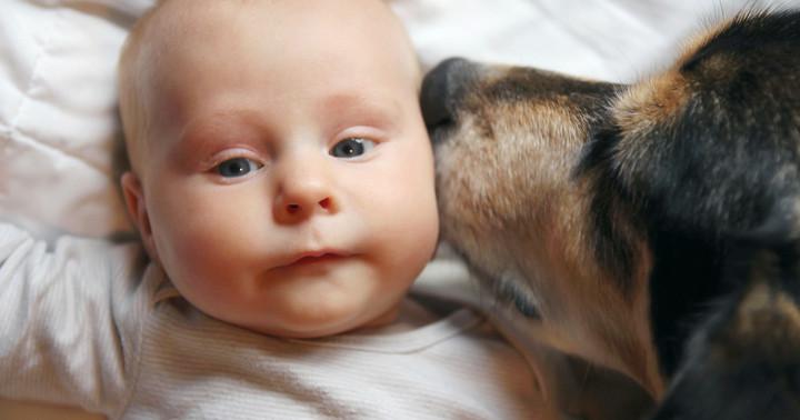 赤ちゃんの頃から動物に触れると喘息が少なくなる? の写真