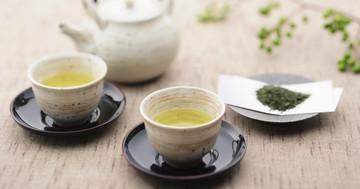 緑茶は肥満にどのように効果を現すのか?の写真