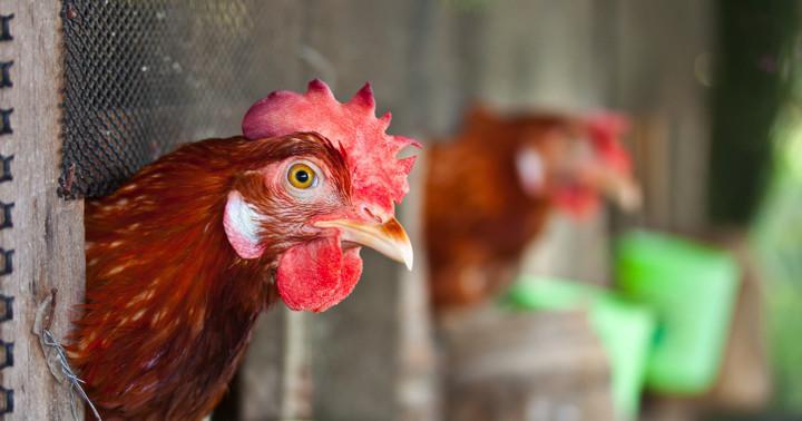 鳥インフルエンザの院内感染か、中国で2人死亡の写真