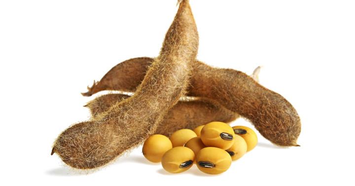 大豆のさや線維で腸内フローラを改善して脂肪吸収抑制 の写真